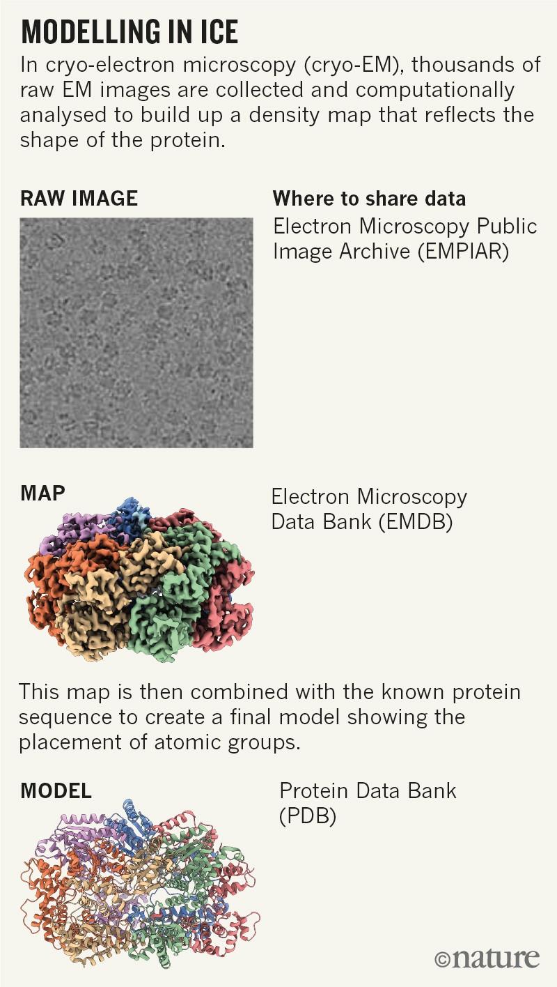 Cryo-electron microscopy shapes up