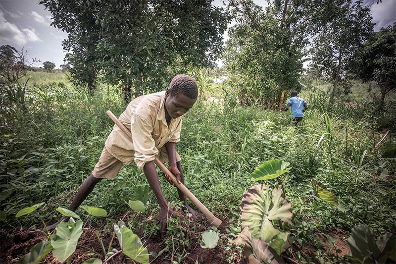 A local farmer bends down to reach foliage in a clearing in Uganda. In his left hand he holds a hoe.