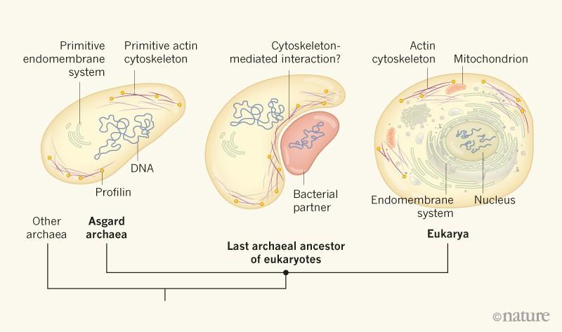 molecular evolution a statistical approach