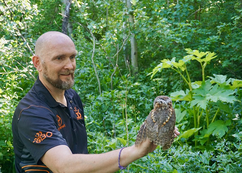 Avian biologist Markus Mika holds an adult female flammulated owl
