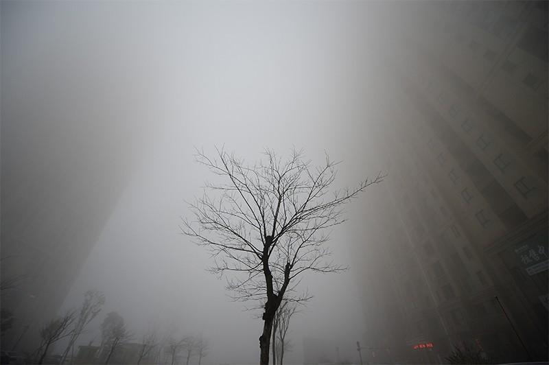 Buildings can just be seen behind a leafless tree during heavy smog in Jinan, China