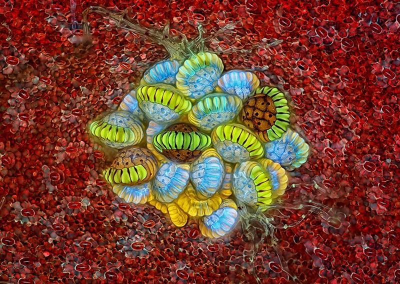 A fern's sorus