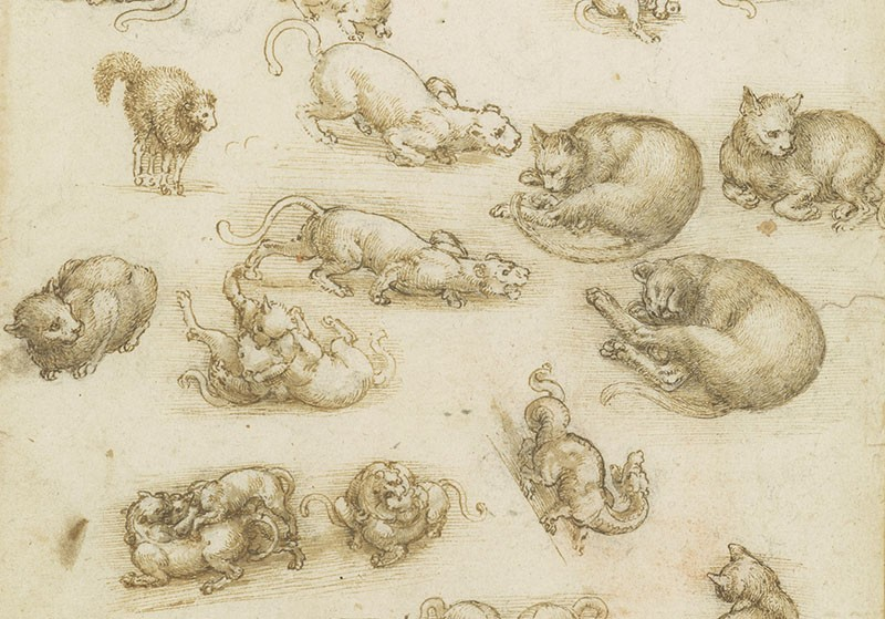 Cats, lions, and a dragon c.1513-18 by Leonardo Da Vinci. Pen and ink with wash over black chalk