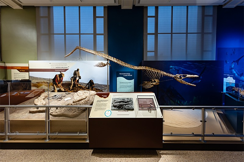"A life-size reconstruction of Prognathodon kianda on display in ""Sea Monsters Unearthed."""
