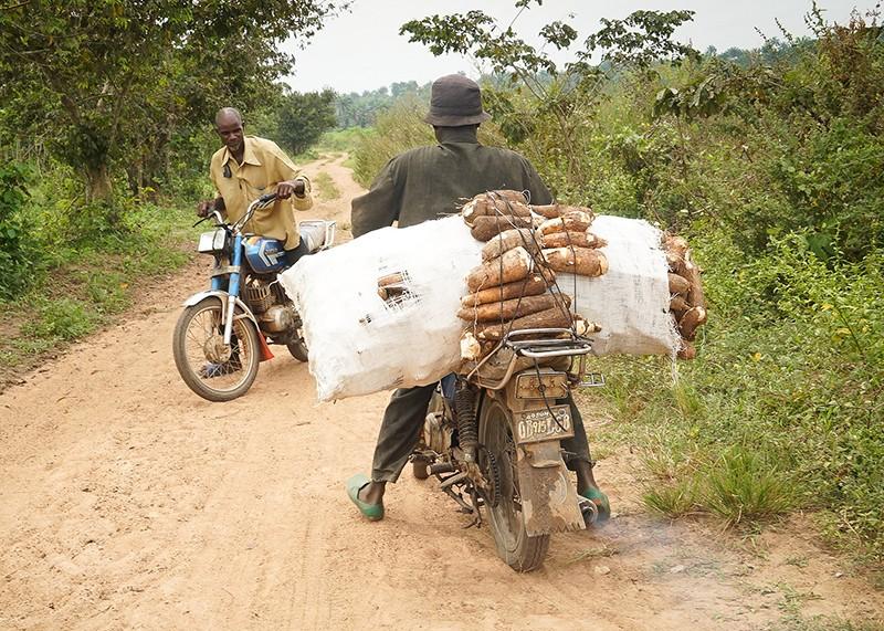 Transporte de yuca en Nigeria