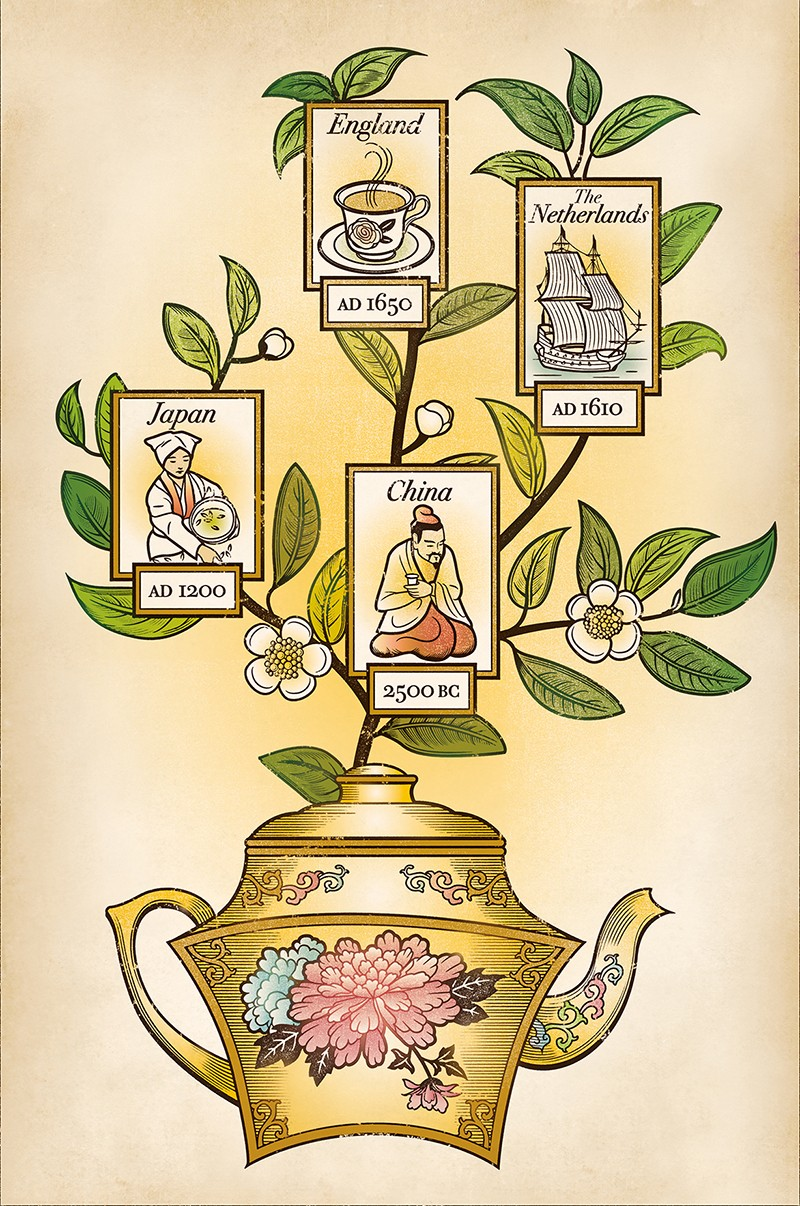 The growth of tea