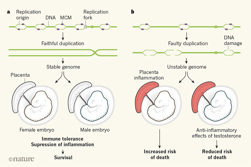 Unstable genomes promote inflammation