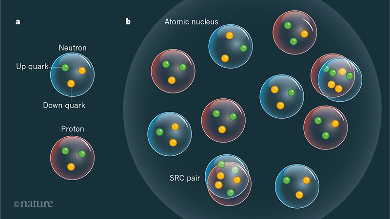 Why neutrons and protons are modified inside nuclei