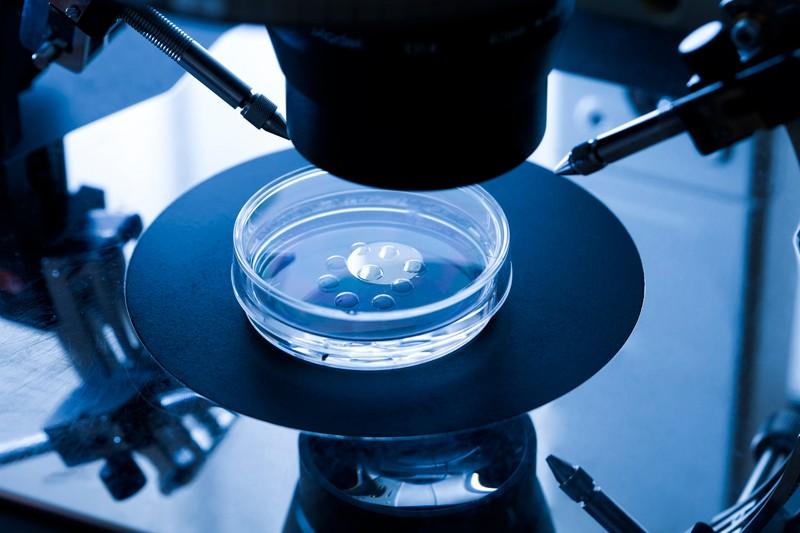 Embryo culture dish used for in vitro fertilisation