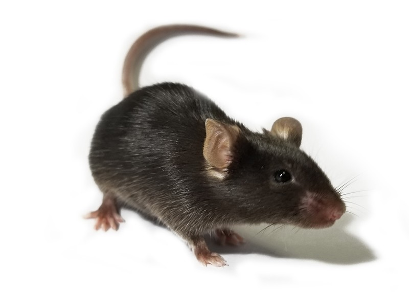 Infrared vision mouse