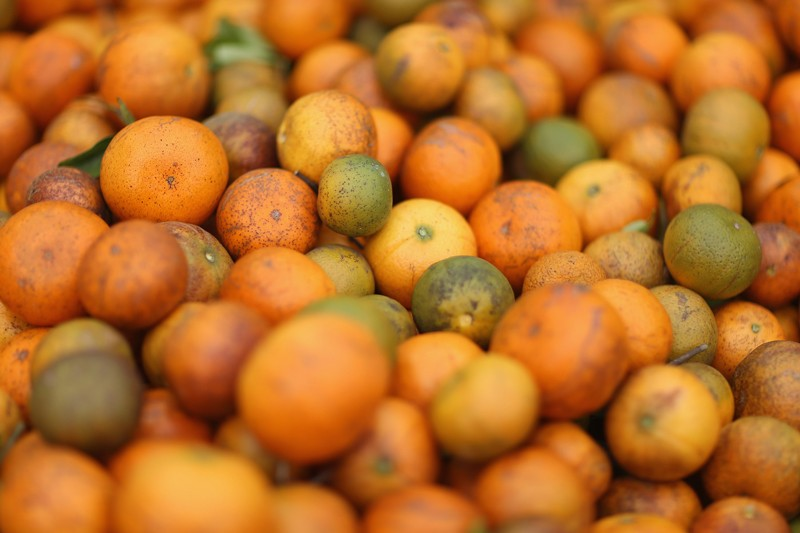 A large pile of tangerines in a bin