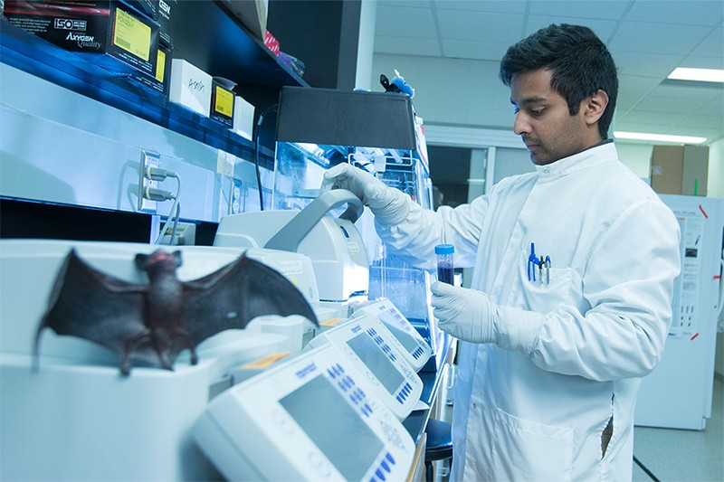 Arinjay Banarjee working in a lab in the University of Saskatchewan in Canada, with a toy bat in the foreground