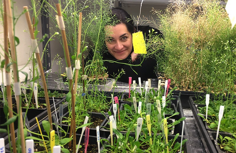 Gabriela Auge with Arabidopsis plants in Fundación Instituto Leloir's phytotron in Argentina