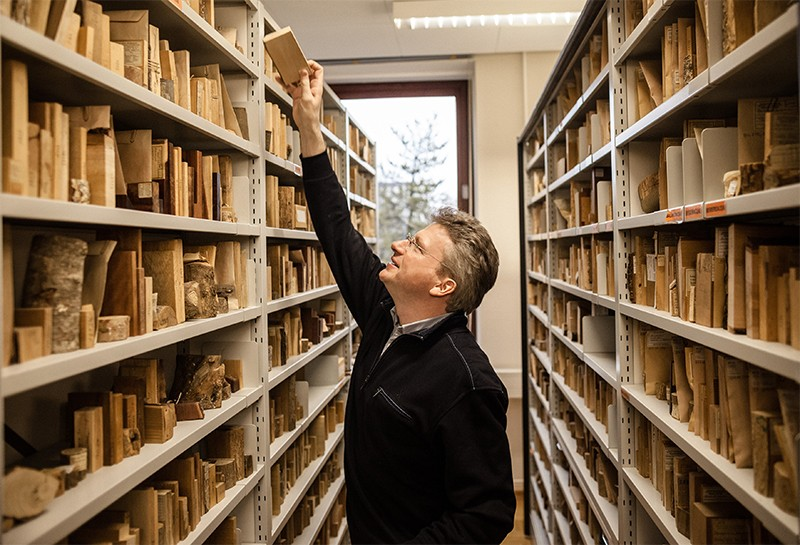 Gerald Koch returns a wood sample in the scientific xylothek of the Thünen Institute in Hamburg
