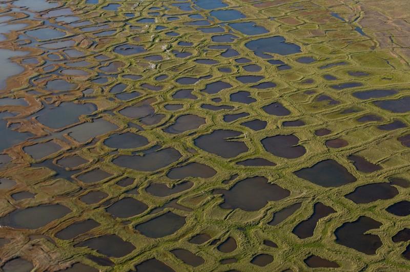 Laghi Thermokarst che coprono il paesaggio della tundra lungo la costa artica nel National Petroleum Reserves, Alaska.