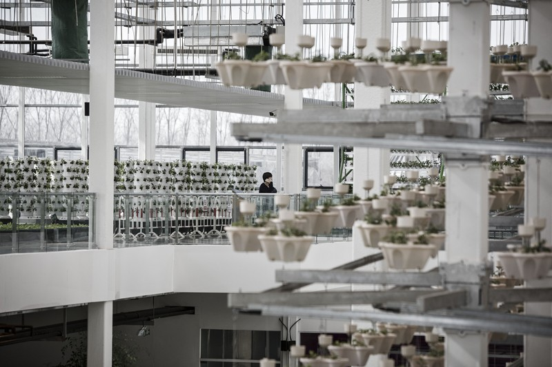 potted plants growing in a rotary light-tracking system inside a greenhouse at the high-tech indoor Cofco Wisdom Farm
