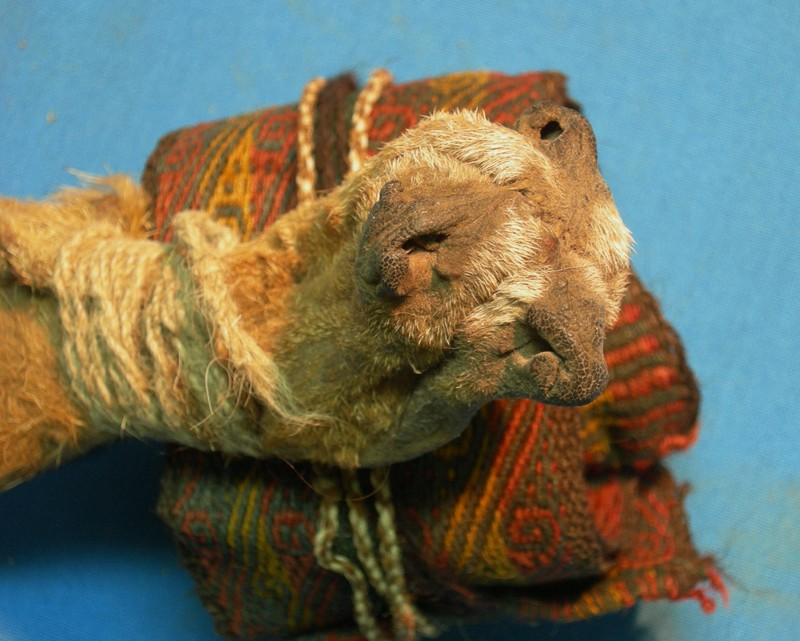Artefacts found in a 1,000-year-old ritual bundle - a pouch made of fox snouts and a textile headband