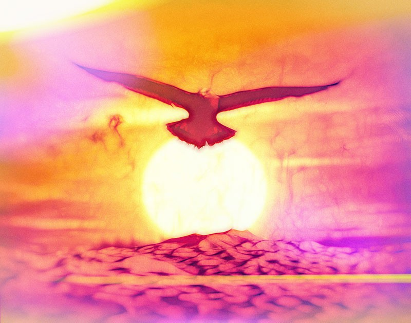 Artistic image of a gull in flight backed by a blazing sun