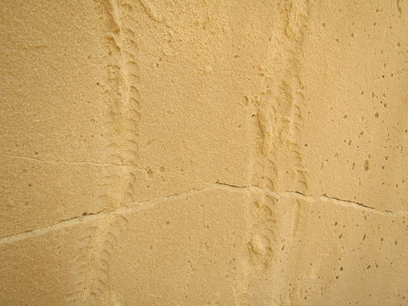 Fossilized turtle tracks in sandstone.