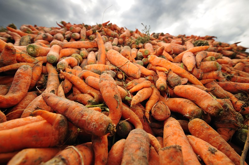 A pile of waste carrots