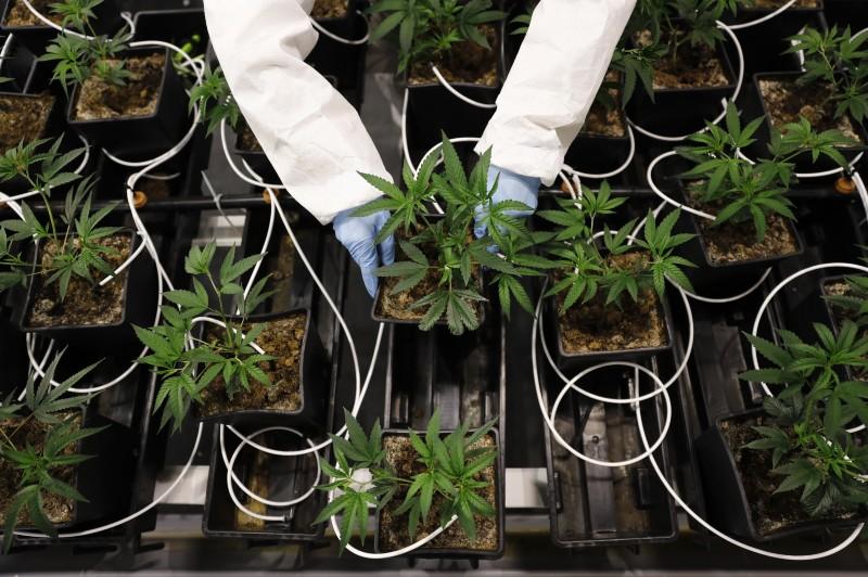Centrifugal partition chromatography's new use: medical marijuana