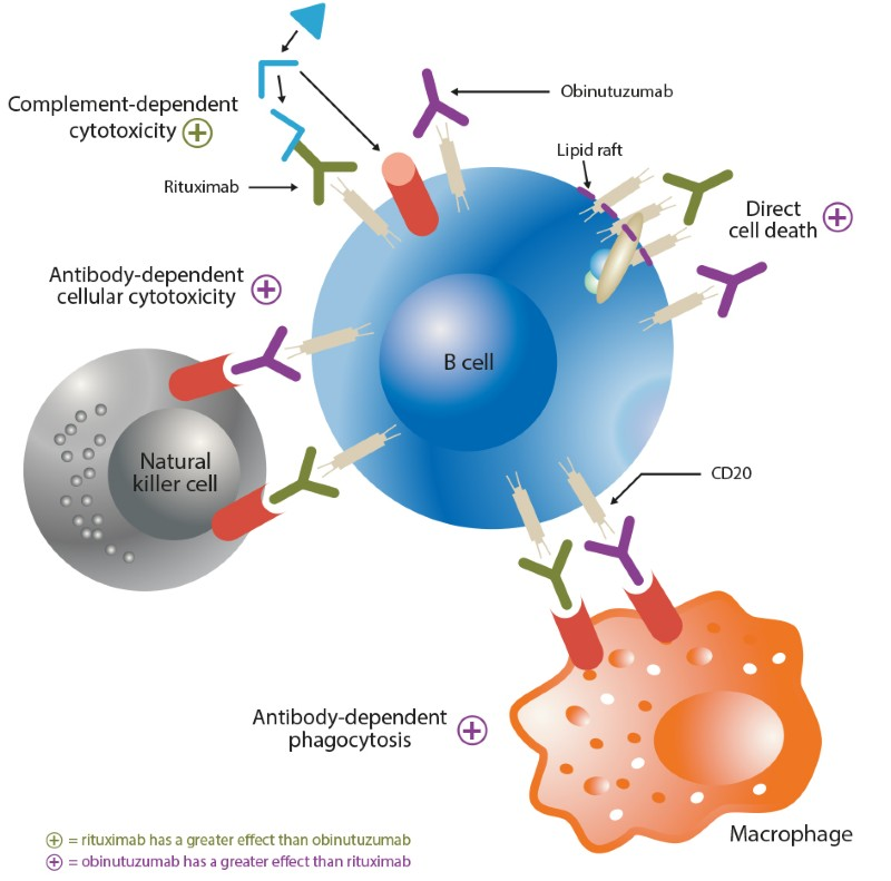 Obinutuzumab for the treatment of non-Hodgkin lymphomas