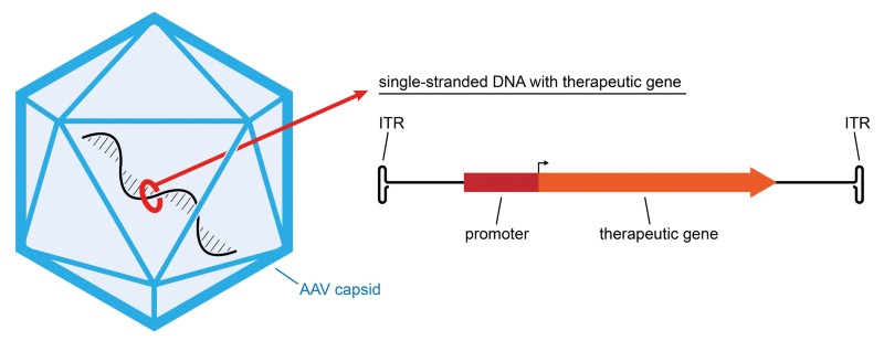 Realizing the promise of gene therapy through collaboration