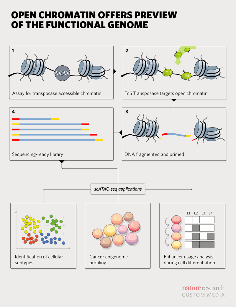 Previewing the functional genome with ATAC-Seq and NGS